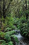 Rainforest, Queimadas, Madeira, Portugal, Atlantic Ocean, Europe