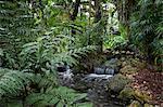 Rain forest, Fairchild Tropical Gardens, Miami, Florida, United States of America, North America