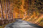 Trentino Alto Adige, autumn colors in a mountain street road