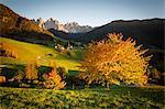 Odle, Dolomites Alps, Trentino Alto Adige, Italy. autumn colors and Santa Maddalena church