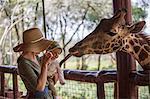Kenya, Nairobi. A mother and her baby feed a Rothschild's Giraffe.