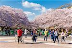 Cherry Blossom Festival at Ueno Park, Ueno, Taiti-ku, Tokyo, Japan