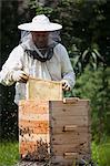 Male beekeeper examining bee hive at farm
