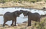 Fighting elephants near a pond.