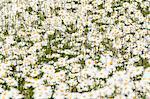 Wildflowers, close-up