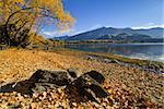 Autumn colors on lake Wanaka, south island, New Zealand
