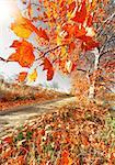 Autumn scenery. Orange tree branch