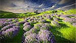 Lavender fields around a castle