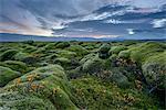 Moss covered landscape at sunrise, Eldhraun, Iceland