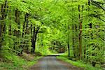 Forest Road in Spring, Miltenberg, Miltenberg-District, Churfranken, Franconia, Bavaria, Germany