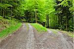 Forked Forest Road in Spring, Miltenberg, Miltenberg-District, Churfranken, Franconia, Bavaria, Germany