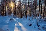 Snow Covered Winter Forest at Sunrise, Grosser Feldberg, Frankfurt, Taunus, Hesse, Germany