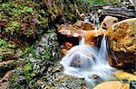 River in the mountain forest, San Carlos de Bariloche, Rio Negro, Patagonia, Argentina, South America