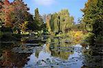 Claude Monet's water garden in October, Giverny, Normandy, France, Europe