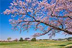 Nara Prefecture, Japan