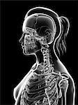 Human cervical spine and skull, computer illustration.