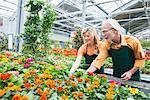 Two gardeners working in greenhouse, Augsburg, Bavaria, Germany