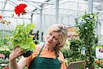 Female gardener checking inventory with digital tablet in garden centre, Augsburg, Bavaria, Germany