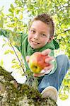Portrait of boy holding picked apple climbing apple tree