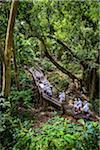 Sacred Monkey Forest Sanctuary, Padangtegal, Ubud, Bali, Indonesia