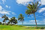 Coconut Palms on Coast