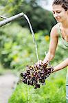 Woman Washing Head Of Lettuce