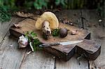 An arrangement of wild mushrooms and garlic