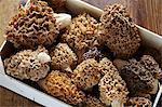 A crate of freshly harvest morel mushrooms