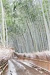Bamboo grove in snow, Sagano, Kyoto, Japan