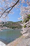 Cherry blossoms, Togetsu bridge on Katsura river, Arashiyama, Kyoto, Japan