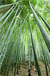 Bamboo grove, Sagano, Kyoto, Japan