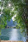 Bamboo forest with Yulong river (Yulonghe), Gaotian village, Yangshuo, Guilin, Guanxi, PRC