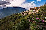 Coroico, La Paz Department, Bolivia, South America