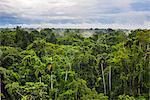 Amazon Rainforest at Sacha Lodge, Coca, Ecuador, South America