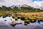 Arakur Nature Reserve, Hotel Arakur Ushuaia Resort and Spa, Ushuaia, Tierra del Fuego, Patagonia, Argentina, South America