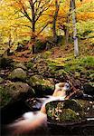 Padley Gorge, Peak District, Derbyshire, England, United Kingdom, Europe