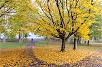 Autumn colours in Leazes Park, Newcastle Upon Tyne, Tyne and Wear, England, United Kingdom, Europe