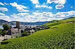 Green fresh vineyard near Ruedesheim in Rheinland-Pfalz, Germany.