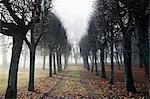 Treelined dirt road at autumn