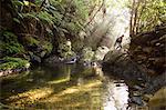 A man exploring a river in the jungle