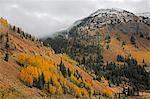 Autumn trees on remote hillside, near Silverton, Colorado, United States