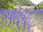 Lavender, Abbaye de Senanque, France