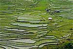 Aerial view of marshy rural fields