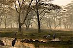 Misty sunrise on the banks of Lake Nakuru, Lake Nakuru National Park, Kenya, Africa