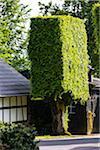Rectangle shaped beech tree hedge by a house, Heckenland, entrance to the Eifel National Park (Nationalpark-Tor), Hoefen, North Rhine-Westphalia, Germany