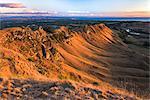 Te Mata Peak at sunrise, Hastings near Napier, Hawkes Bay Region, North Island, New Zealand, Pacific