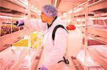 Male worker spraying shelves of micro greens in underground tunnel nursery, London, UK