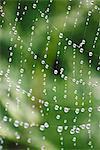 Sweden, Bohuslan, Tjorn, Close up of wet spider web