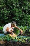 Sweden, Ostergotland, Mature woman harvesting fruit