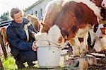 Sweden, Vastergotland, Olofstorp, Woman feeding cows (Bos taurus)